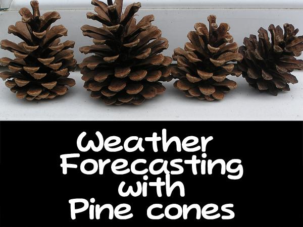 The Pinecones Ooh!