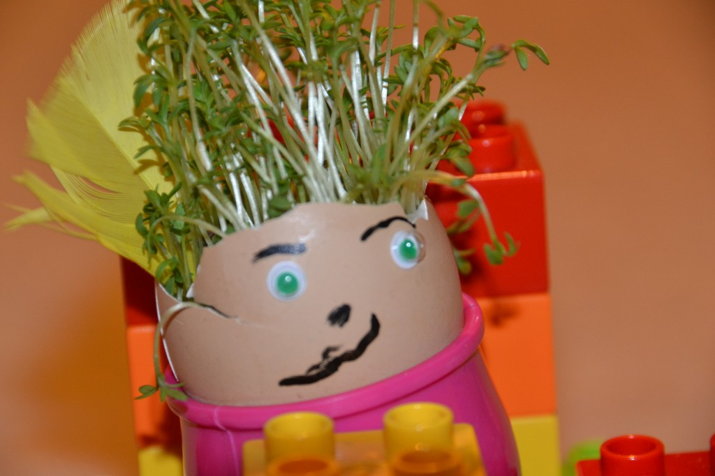Cress in an egg