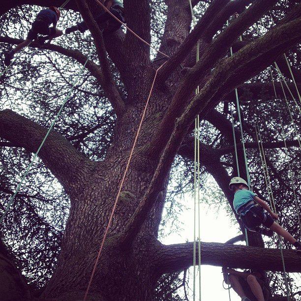 big tree climbing company