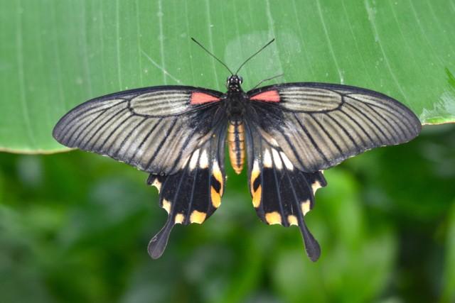 Beautiful symmetrical butterfly photo