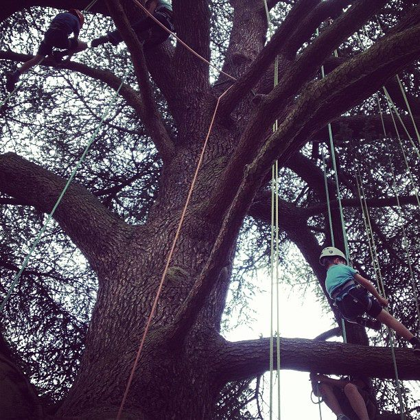 big tree climbing company