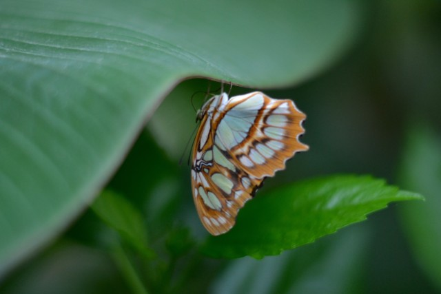 Beautiful butterfly photographs