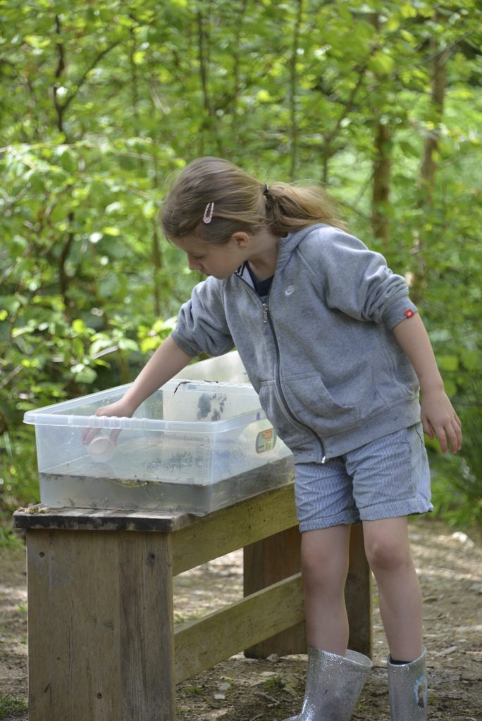 pond dipping at Forest Holidays