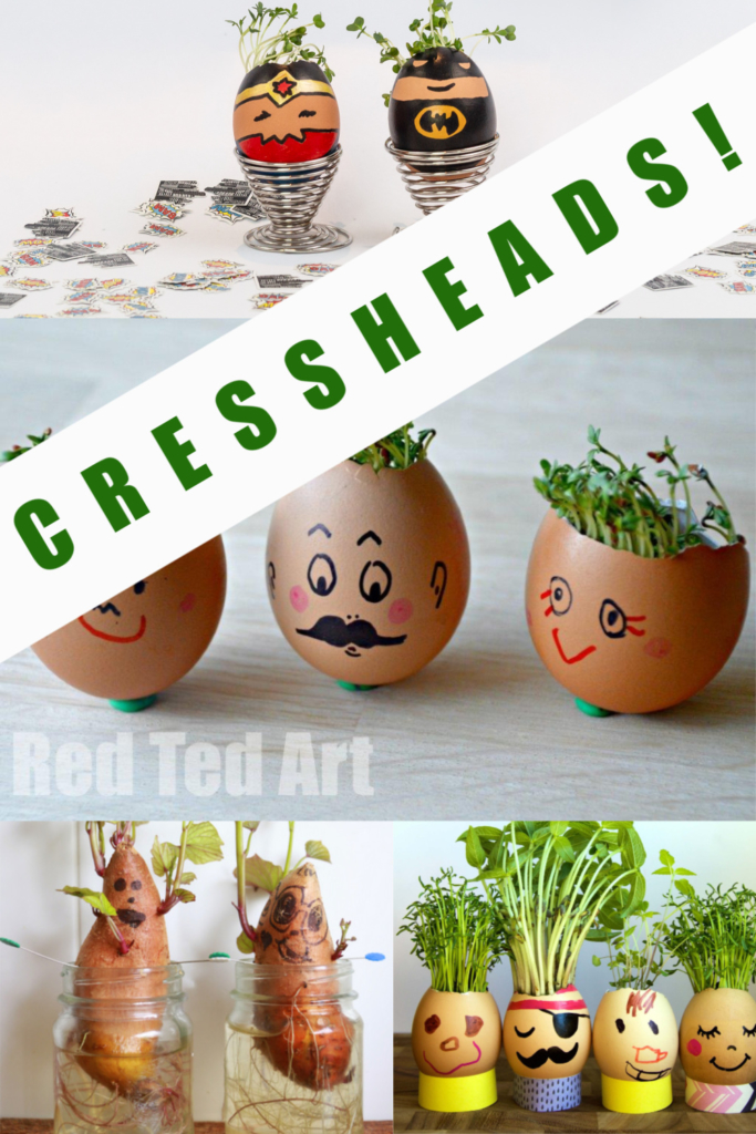 Easy cress heads for kids - grow cress with no soil! #scienceforkids #cressheads #plantscience #springscience