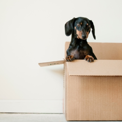 5 Tips to Make Moving Day Less of a Headache!