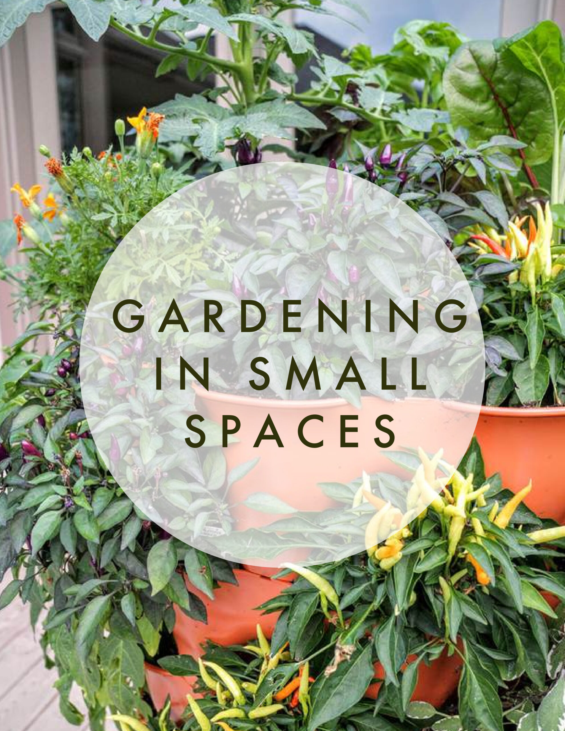 Tops tips for gardening in small spaces